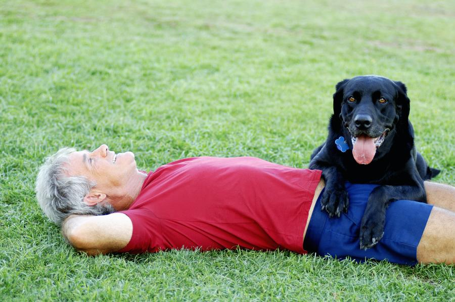 How to travel in an RV with pets: an in-depth guide 2