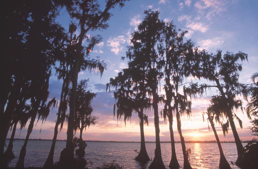 Spend your winter in Haines City, Florida: Is Haines City a good snowbird location? 17