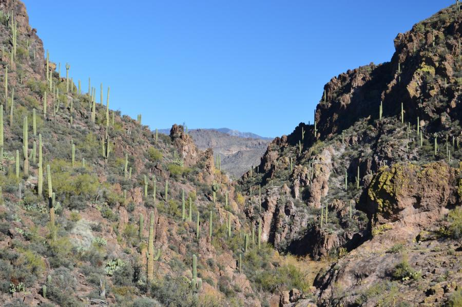 Spend your winter in Phoenix, Arizona: Is Phoenix a good snowbird location? 30