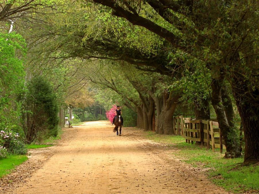 Spend your winter in Aiekn - South Carolina - Is Aiekn a good snowbird location 12