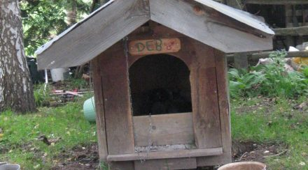 Prepare your Outdoor Dog Kennel for the winter
