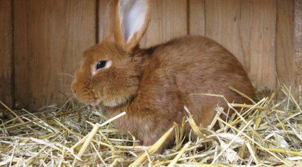 Prepare your Rabbit Hutch for the winter