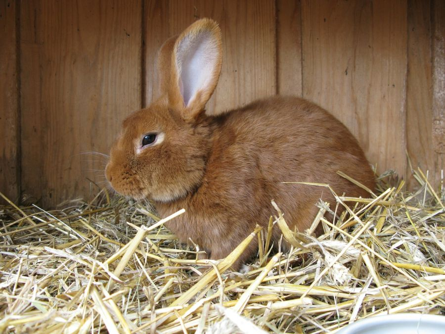 Prepare your Rabbit Hutch for the winter 2
